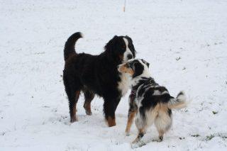 Noel und Tatezi im letzten Winter
