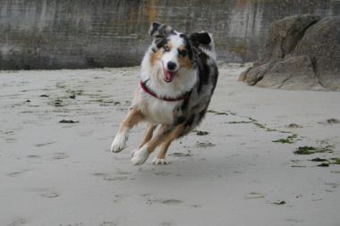 springen macht Spass