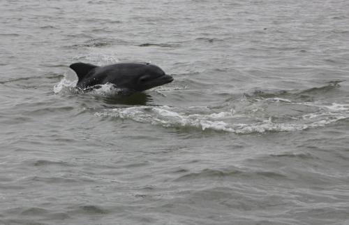 Einer der Delfine