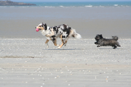 5. Mit Wuschi am Strand von St. Michel En Greve