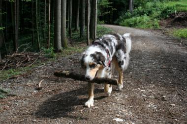 Holz sammeln
