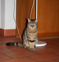 Nachbars Katzen 2