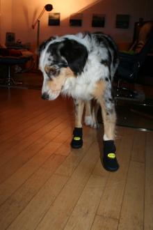 Schuhe für Tatezi 2