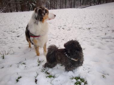 Tatezi und Wuschi im Schnee