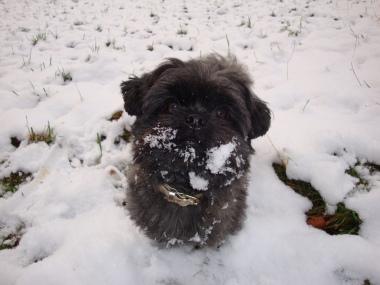 Wuschi im Schnee