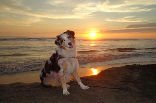 Geniessen den Sonnenuntergang...