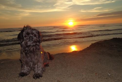...am Strand von Huanchaco
