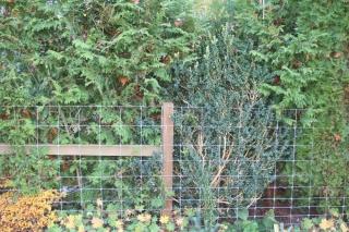 gefährlicher Zaun