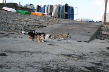 hunderennen-4