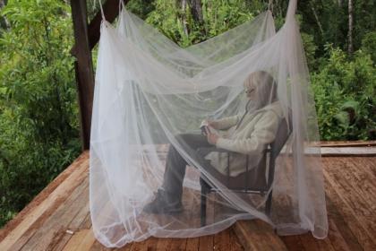 Lesen unter dem Mueckennetz