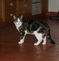Nachbars Katzen 1