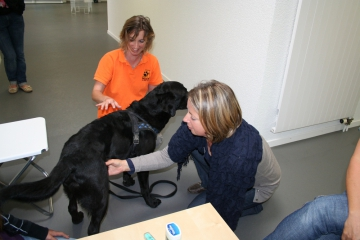Puls messen bei Hunden