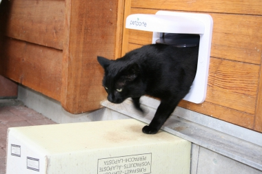 Söfi geht durchs Katzentor
