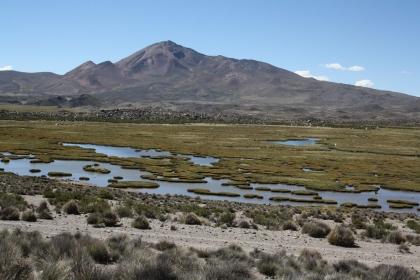 Sumpflandschaft im Parque Nacional Lauca