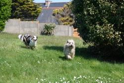 Tatezi und der Hund vom Baggerführer