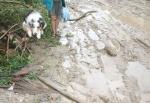 Tatezi bleibt fast sauber