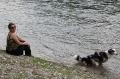 Tatezi pinkelt in einen Fluss